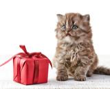 корм для кошек Bozita Feline Funktion