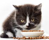 корма для кошек Cat Chow