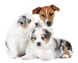питания для собак Bozita